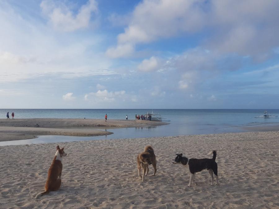 Bantayan Island - pieski odprowadzają naszą wycieczkę