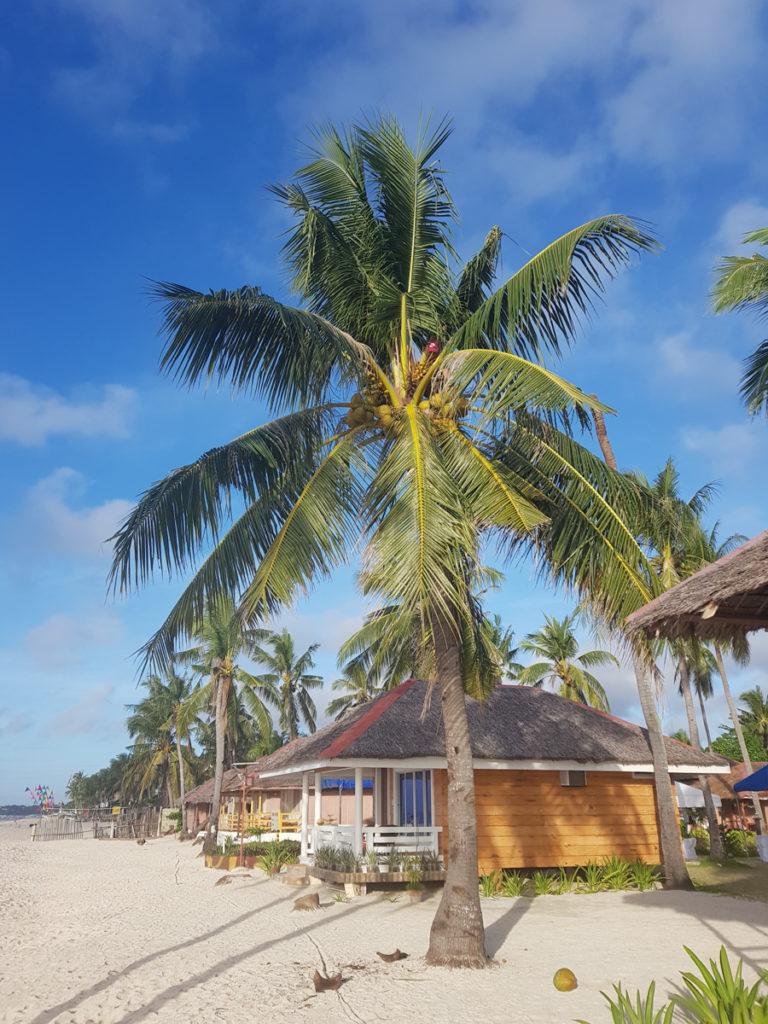 Znajdźcie, gdzie na palmie ukrył się Filipińczyk