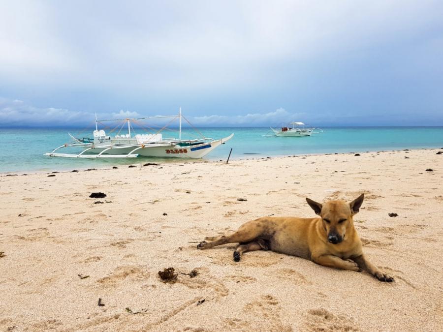 Psy na Bantayan Island