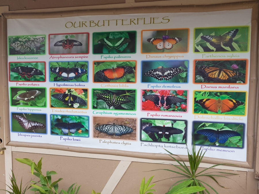 Ogród motyli (Butterfly Garden), Santa Fe