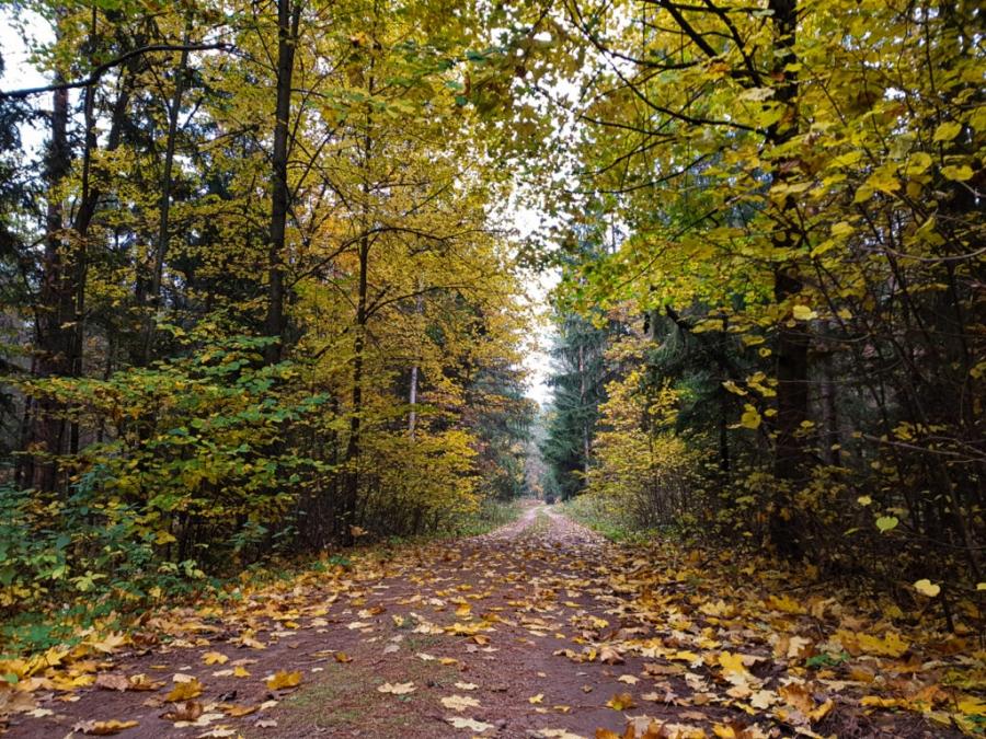 okolice Supraśla, czerwony szlak
